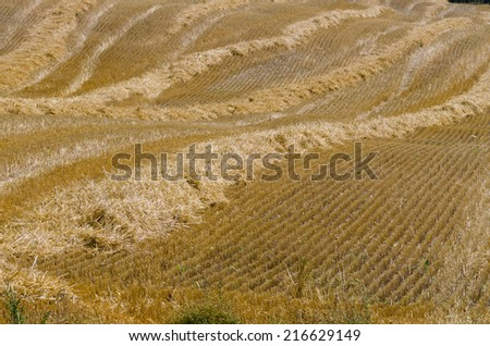 The compressed band on wheat field - stock photo