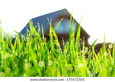 the concept a green grass on a lawn about the house - stock photo