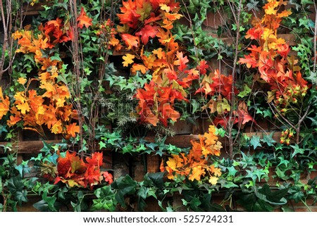 The concept of Autumn with a wall of beautifully coloured leaves