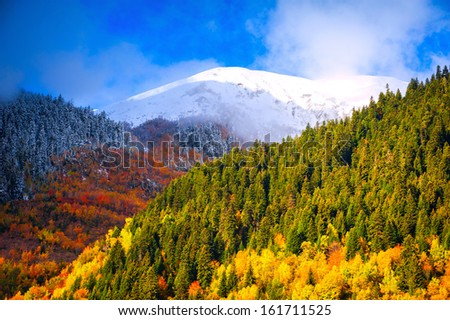 the contrasts of nature. Where the meeting of the autumn and winter - stock photo