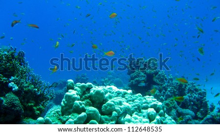 the coral reef of the Red Sea,Egypt