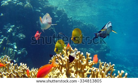 The coral reef scuba diving - stock photo