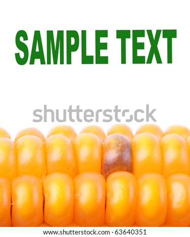 The corn on a white background and easy removable text. - stock photo