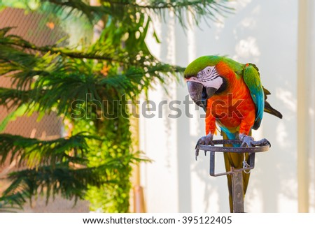 The court parrot ,colorful parrot ,beautiful parrots,parrots loo - stock photo
