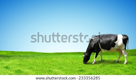 The cow is grazed on a green field. - stock photo