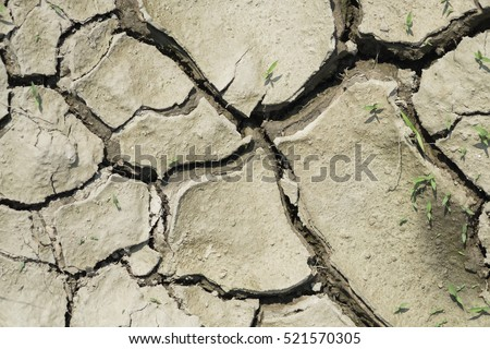 The cracked ground with small plants, Ground in drought, Soil texture and dry mud, Dry land.