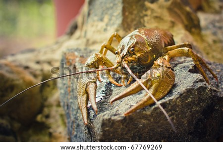 The crawfish on a stone near the river. - stock photo