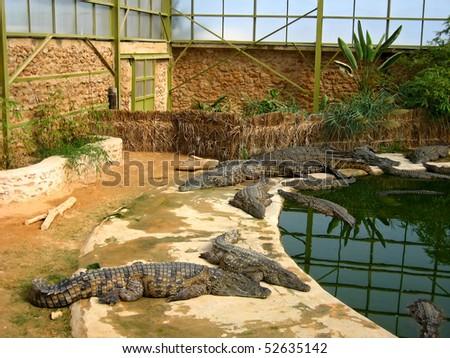 The crocodiles in winter pavilion on the farm on Djerba Island, Tunisia - stock photo