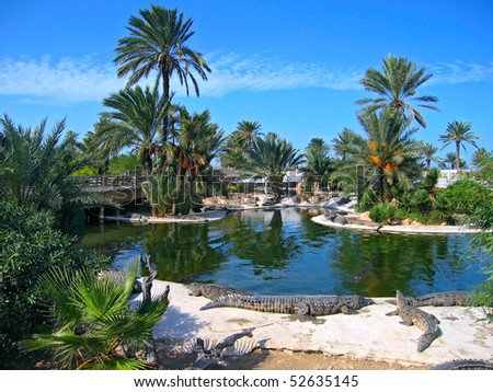 The crocodiles on the farm on Djerba Island, Tunisia