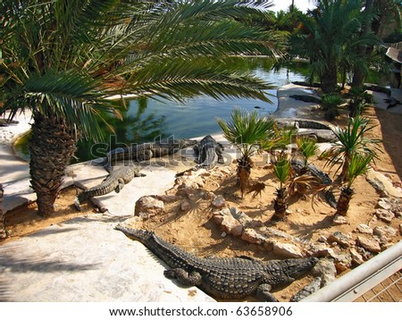The crocodiles on the farm on Djerba Island, Tunisia - stock photo