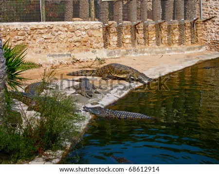 The crocodiles on the farm on Djerba Island, Tunisia - stock photo