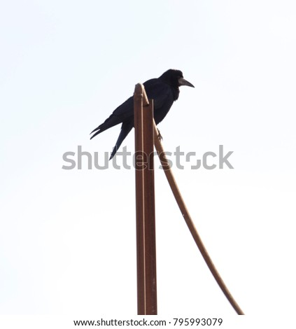 the crow sits on a pipe
