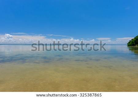 The crystal clear and shallow sandy waters of the Florida Keys with some smaller Mangrove trees