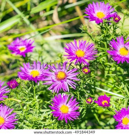 Plantas perennes de flor púrpura III | Jardín de Mike 5 mejores plantas
