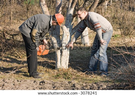 The customer and the worker discuss to a scrap of a tree in a garden