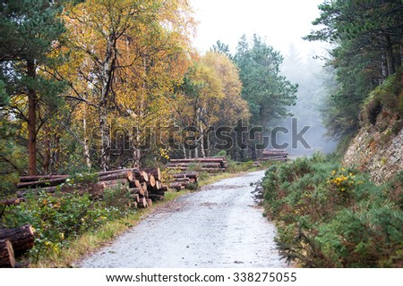 The cut and chopped fire wood are stacked in a heap in Deerpark and Djouce Woods - stock photo