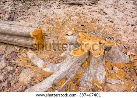 The cut down tree lying in the garden  - stock photo