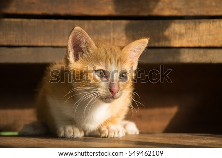 the cute cat in morning,cute cat alone , cat sad,Kitten