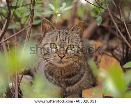 The cute cat in the garden