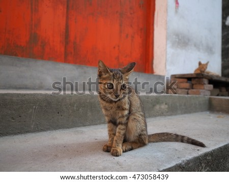 The cute cat in the yard of the village in the countryside