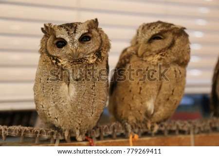 cutest owls stock photo royalty free 779269411 shutterstock