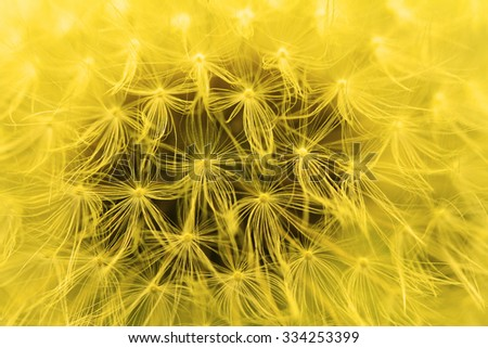 The Dandelion background. Abstract dandelion seeds. - stock photo
