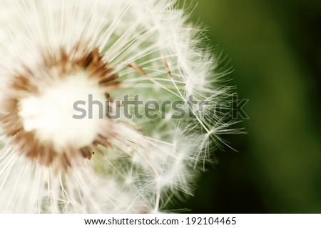 The dandelion on the green background .  - stock photo