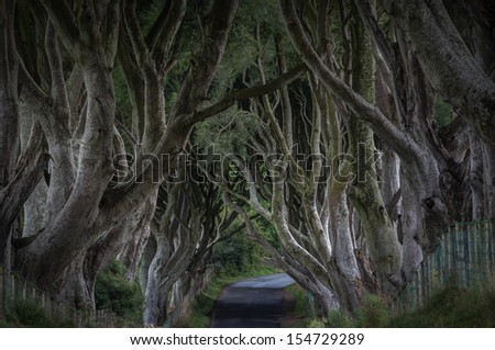 The Dark Hedges - stock photo