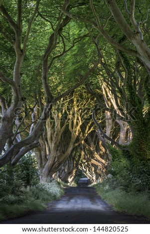 The Dark Hedges Co. Antrim, Bregagh Road, Northern Ireland - stock photo