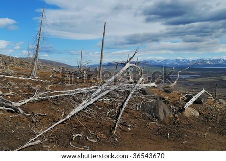 The dead tree - stock photo