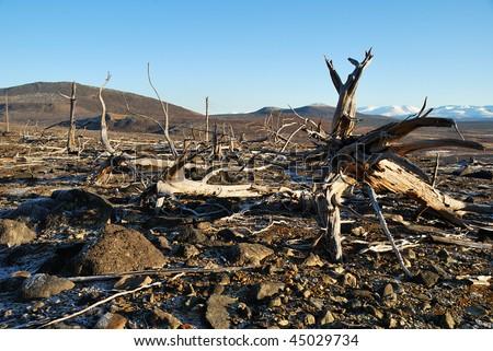 The dead trees - stock photo