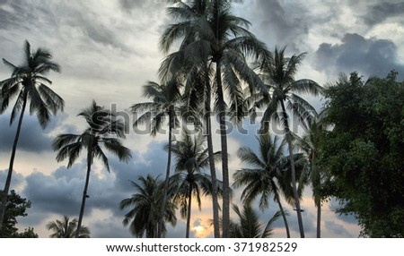 The decline on the tropical island is extraordinary beautiful - stock photo
