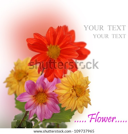 The decorative flowers.Nature background