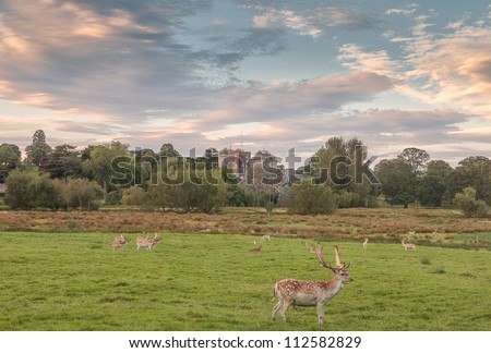 The deers of Powderham Castle, Devon, England. - stock photo