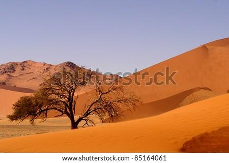 The desert - stock photo