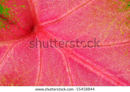 the detail of Red yam leaf