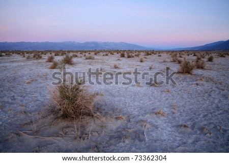 The 'Devils Cornfield', in Death Valley, California. - stock photo