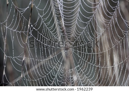 The dew drops covered neatly the entire spider web, and highlight the amazing structure of the web. The shiny and pure dew drops looks very much like the strings of pearls.