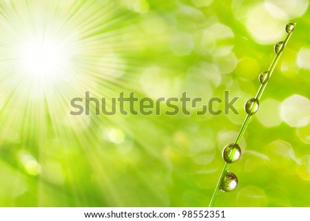 The dew drops on a spring grass in early morning. Natural background. Purity concept. - stock photo