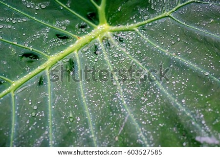 The dew on the leaf