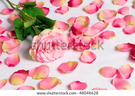 The dismissed rose with the scattered petals