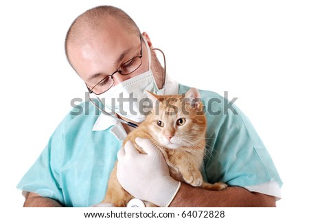 The doctor attends the cat - stock photo