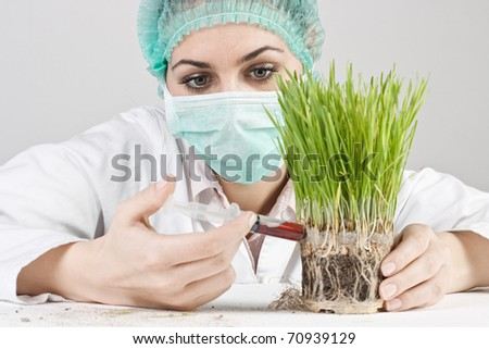 The doctor injects liquid in a genetic modified plant. - stock photo