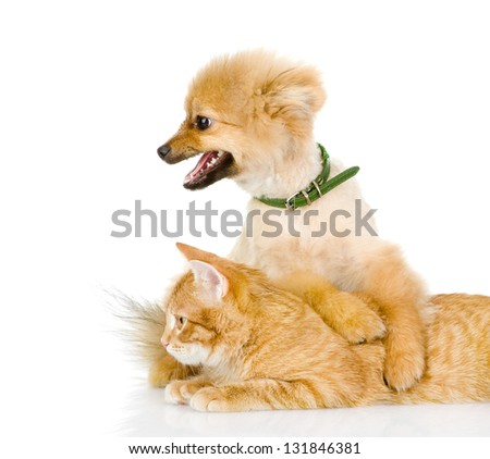 the dog and cat lie together. looking away. isolated on white background - stock photo