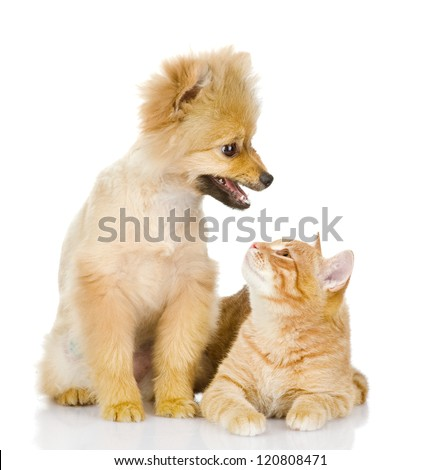 the dog and cat look at each other. isolated on white background - stock photo