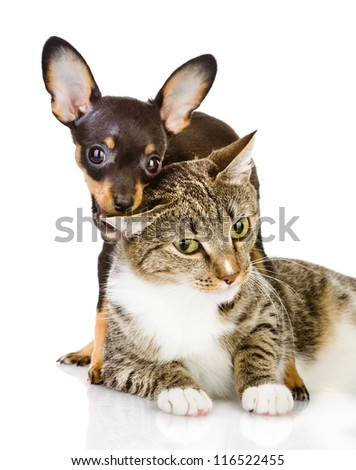 the dog bites a cat. Isolated on a white background - stock photo