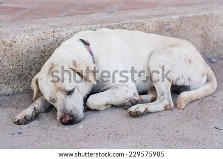 The dog crippled. - stock photo