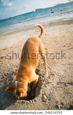 The dog digging a hole in the sand - stock photo