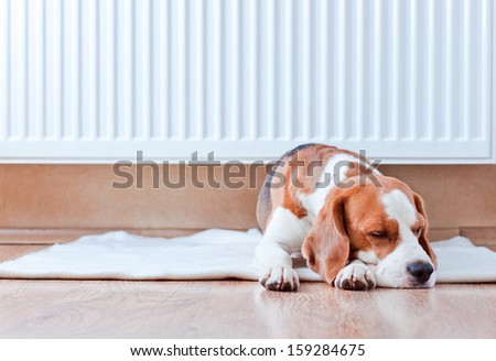 The dog has a rest on wooden to a floor near to a warm radiator - stock photo