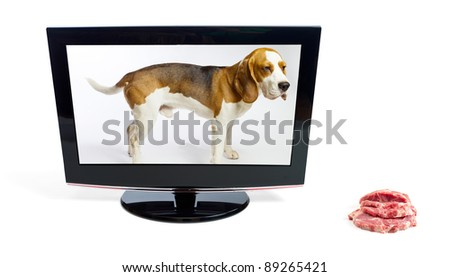 The dog in the monitor looks at a meat,white background. - stock photo